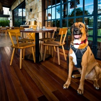 From the Cuna to My Belly – An Honest to Goodness Pet Friendly Restaurant in Merida