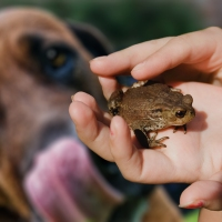 When Dogs Lick Toads - Living in Harmony With Pets and Wildlife